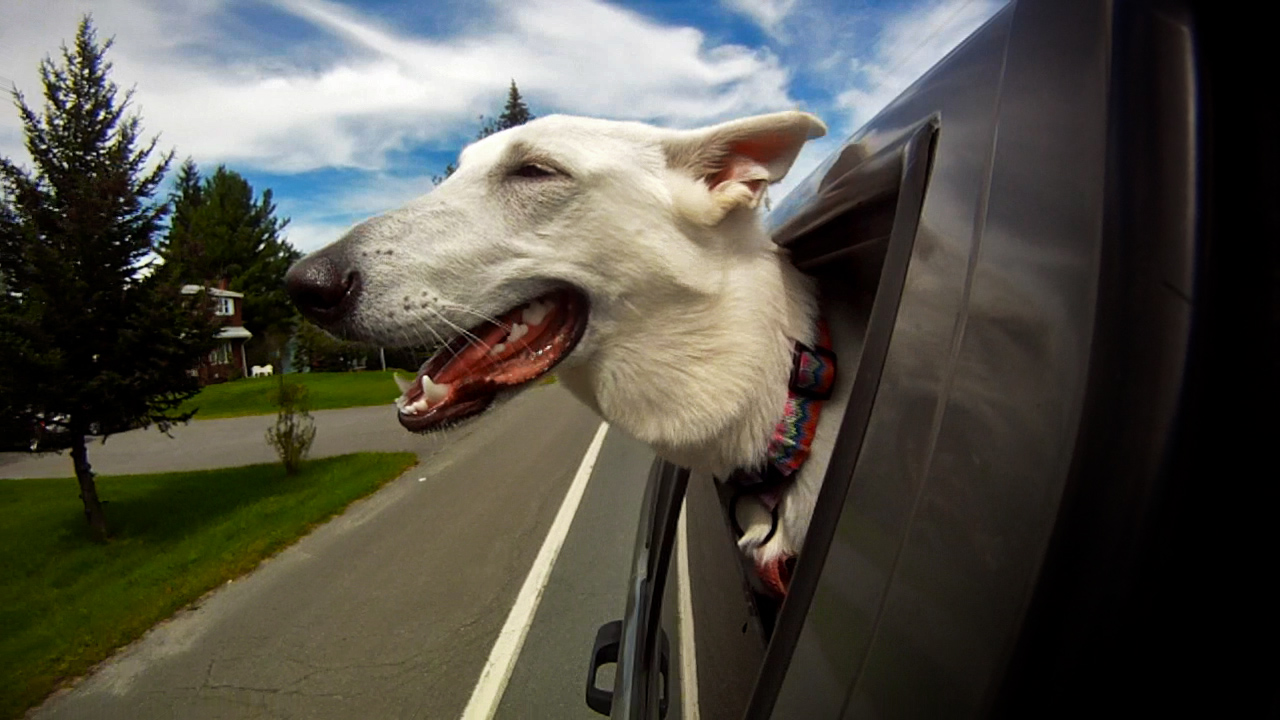 Dogs In Cars by Keith Hopkin