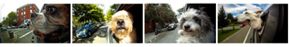 Dogs in Cars Thumbnails