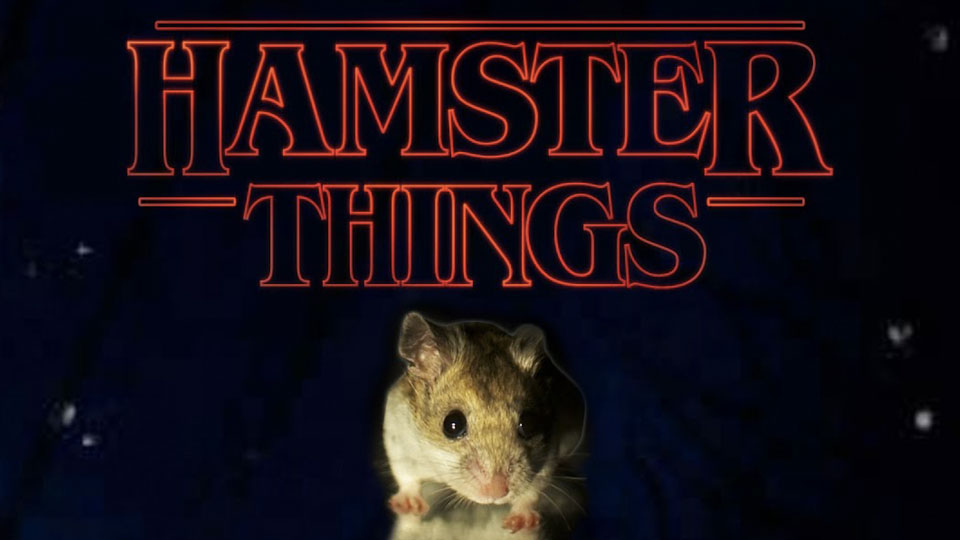 Hamster Things Project Featured